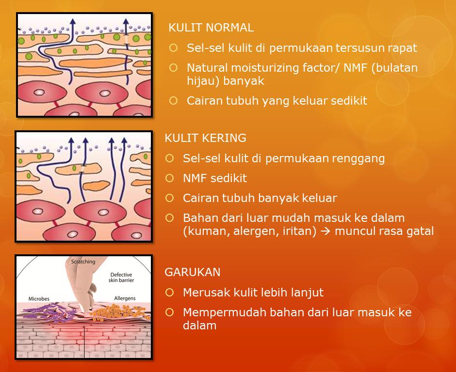 normal vs dry skin